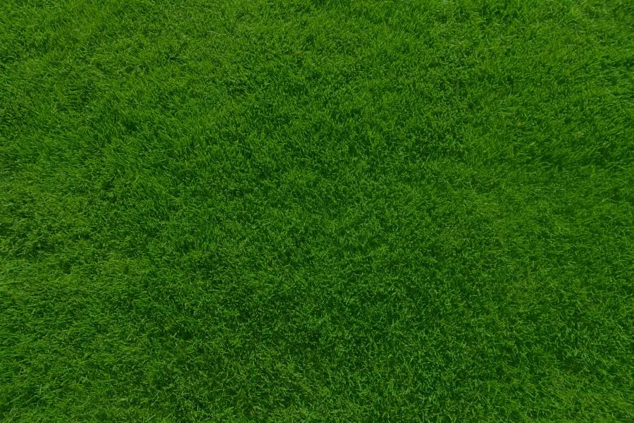 Edin la marca del c sped for Tipos de cesped natural para jardin